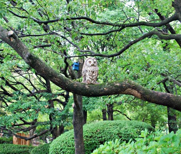 huis ten bosch owl